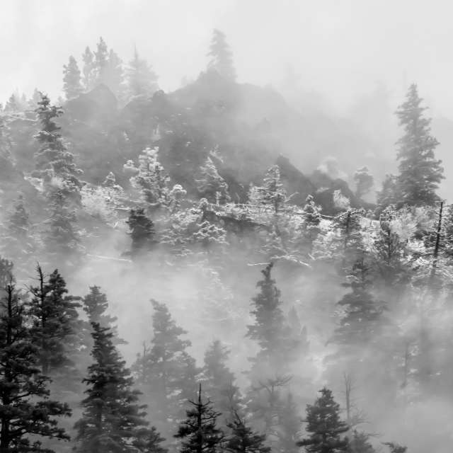 Trees in Mist, BC, Canada
