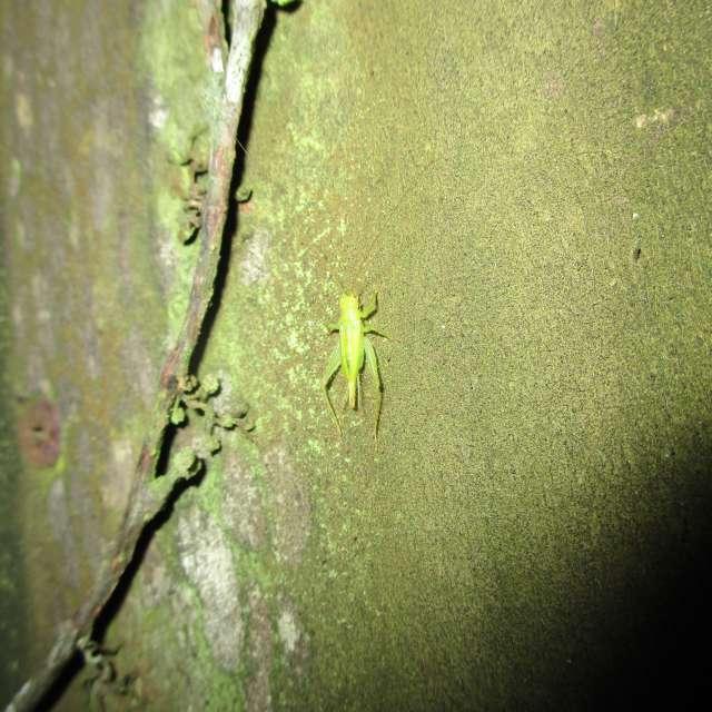 Green Trig