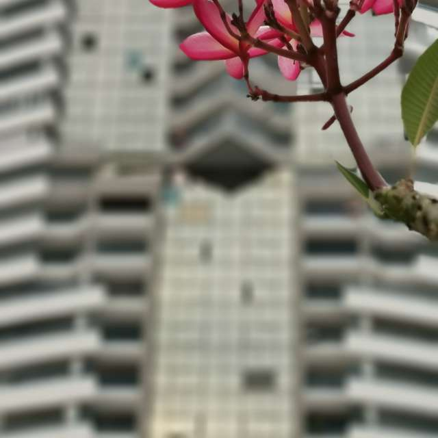 Red flower and great building