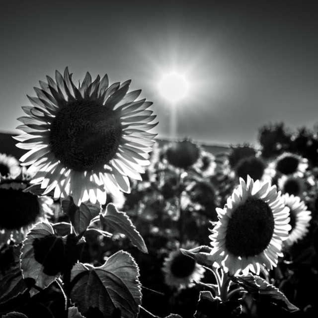 Definiton of summer