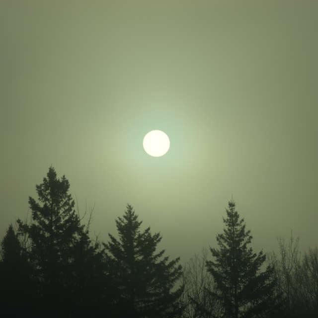 Sunny fog