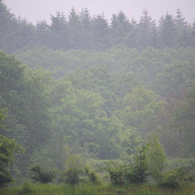 Wasser-Dunst im Wald