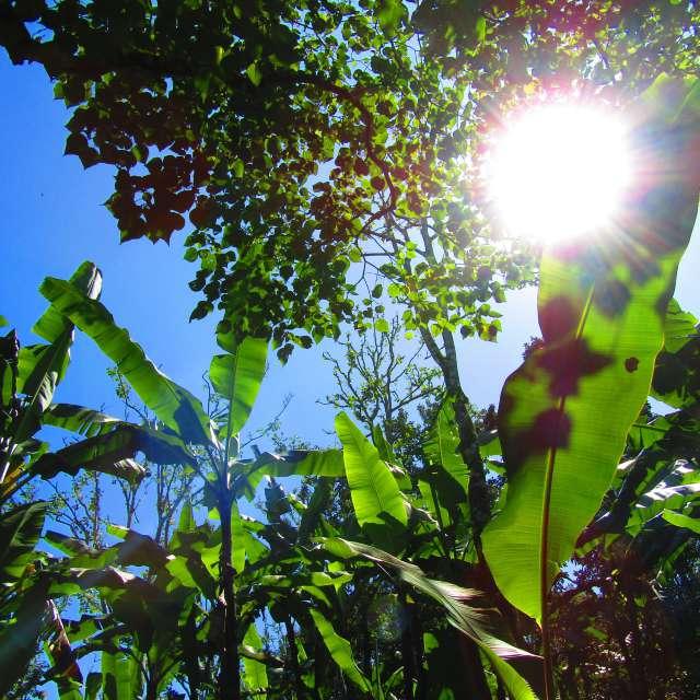 バナナの葉と太陽の光