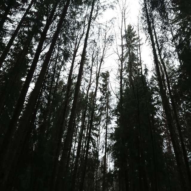 Forrest4lyfe