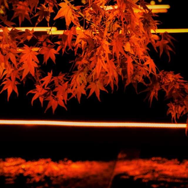 紅葉とリフレクション