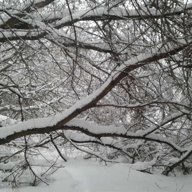Парк в снегу)