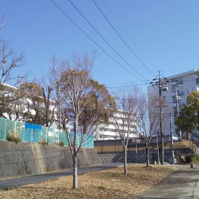 周南市にある県営住宅の敷地から少し離れて撮影ーー
