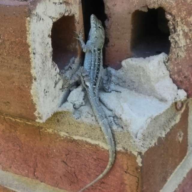 Beautiful Lizard