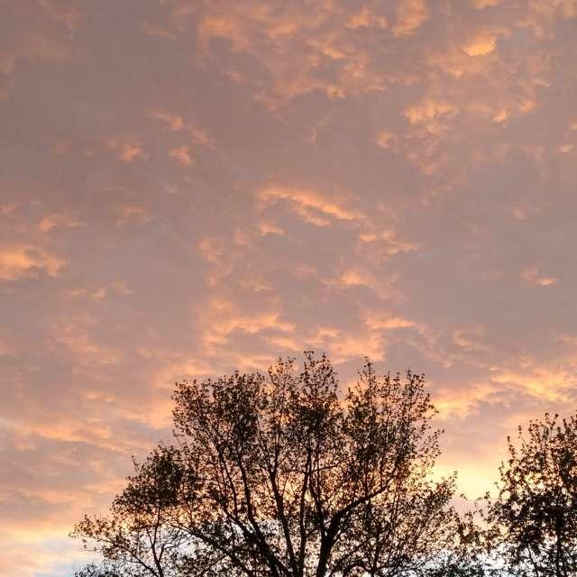 Gold Sky!