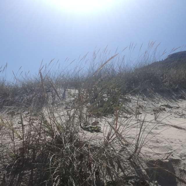 Sand Dune Murtinheira