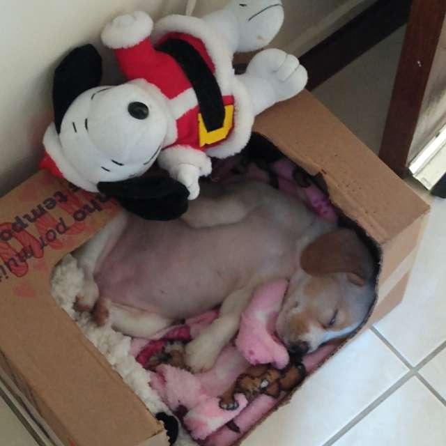 Snoopy 2 vezes 🐕❤️😂