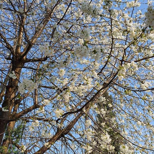 Vorboten des Frühlings