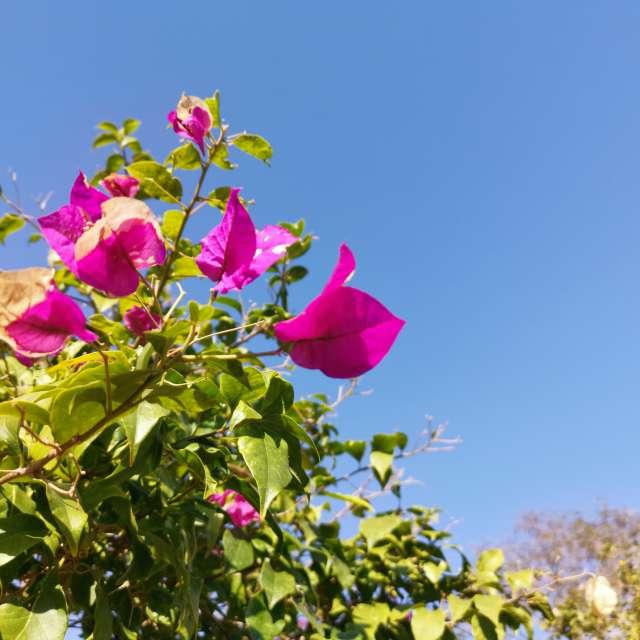 冬空と可憐な花