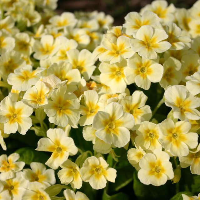 весна+цветы