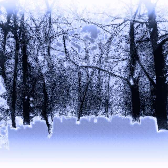 Morning after snowfall.