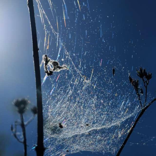 Spider Web Refraction