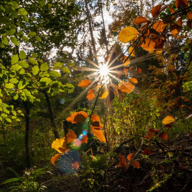 Colorful leaves sunlight rays