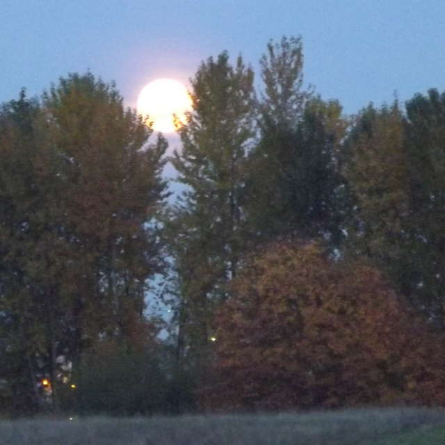 Moon Rise Through Trees