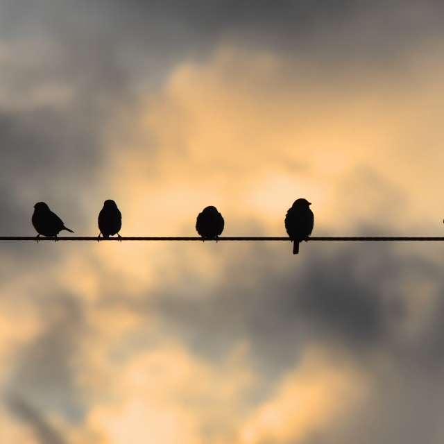 ★鳥達〜★