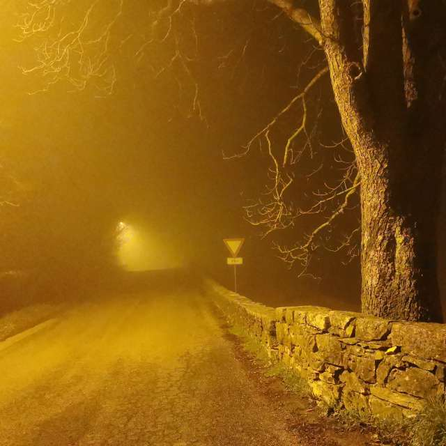 Foggy road in the night