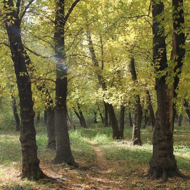 осенняя тропинка в лесу