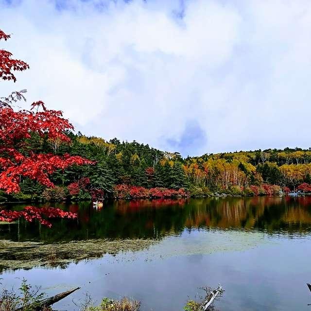 白駒の池 紅葉