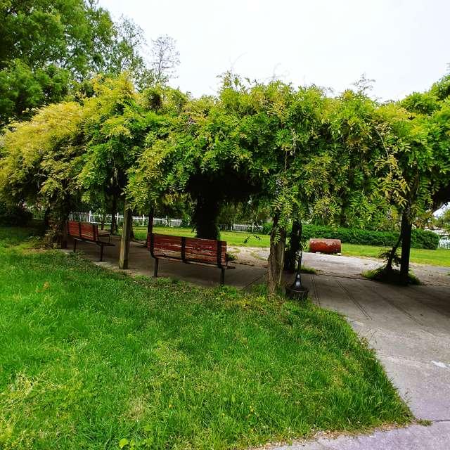 Wysreria Vine In picture.