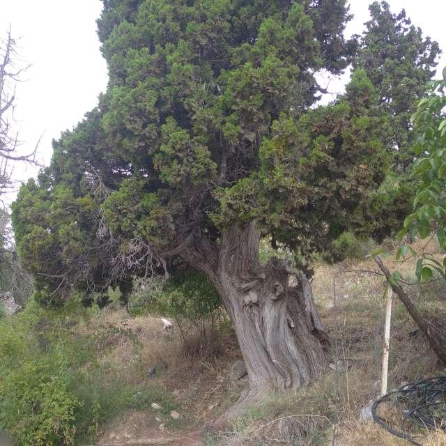 Antalya Feslikan yaylası yolu.