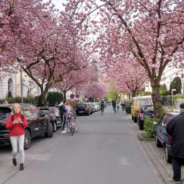 Schulstraße Münster