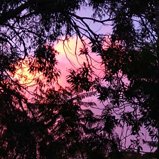 Gumtree sunset