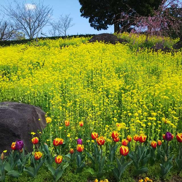 福智山山麓花公園