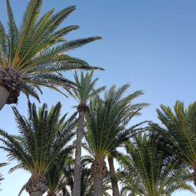 Palm trees Playa Blanca