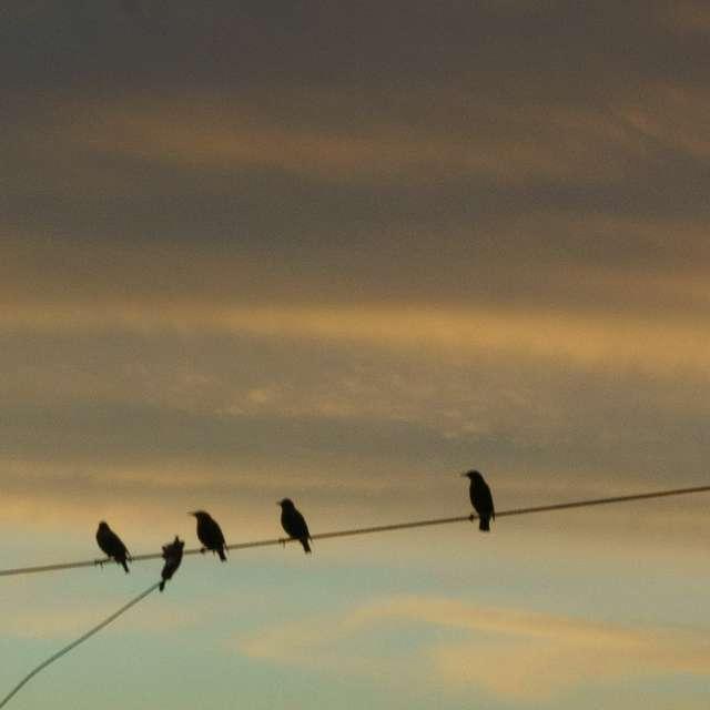 Birds breakfast