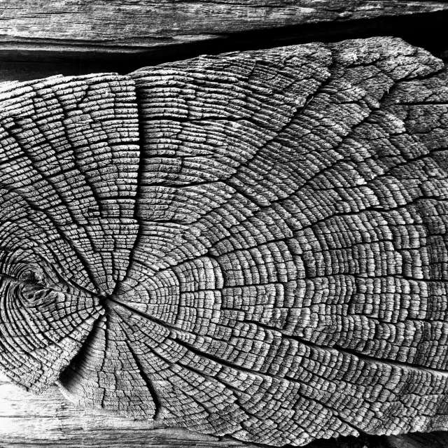 300 years old wood