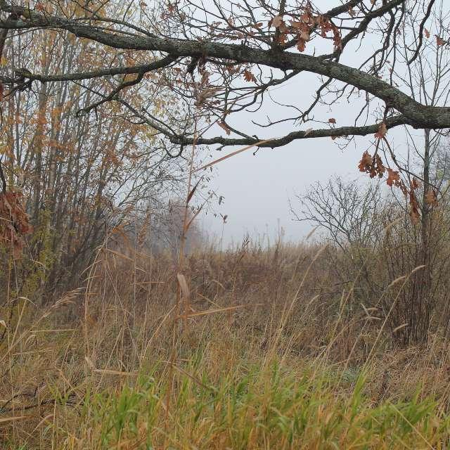 fog in october oak and reeds