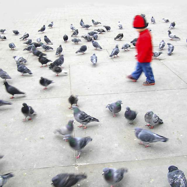 Boy in read and pigeons