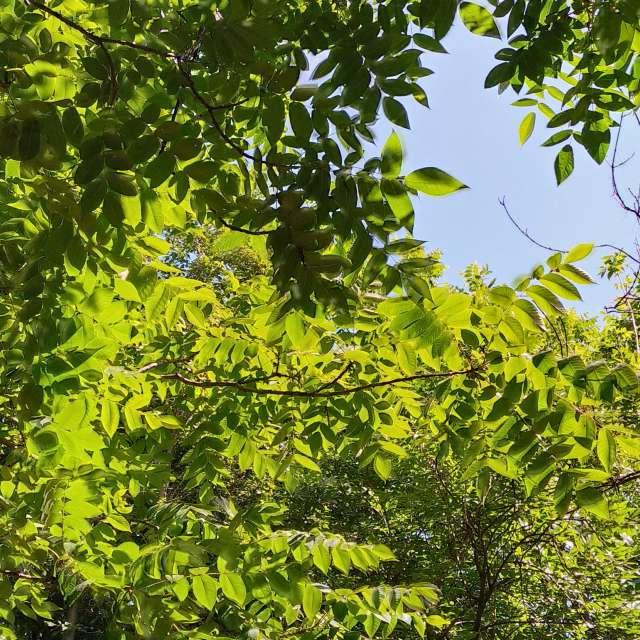 Солнце играет в листве