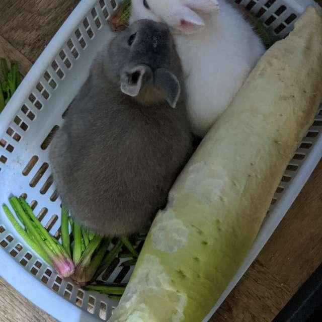 新種の野菜?我が家の子うさぎ