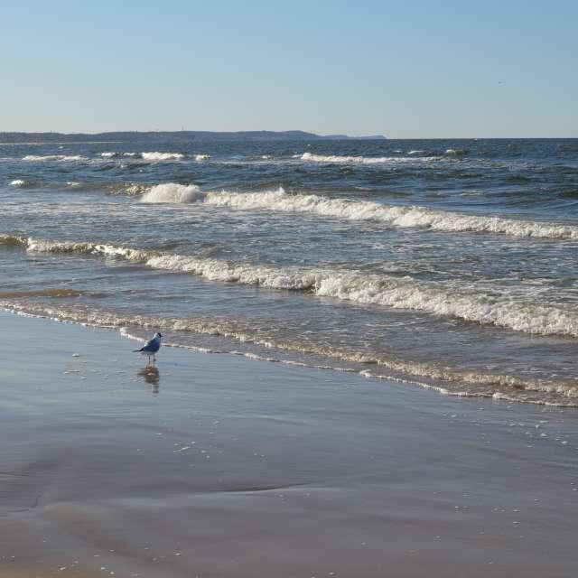 Seagull Świnoujście