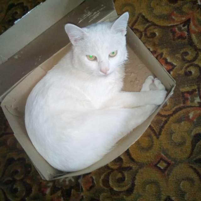 Белый в коробке