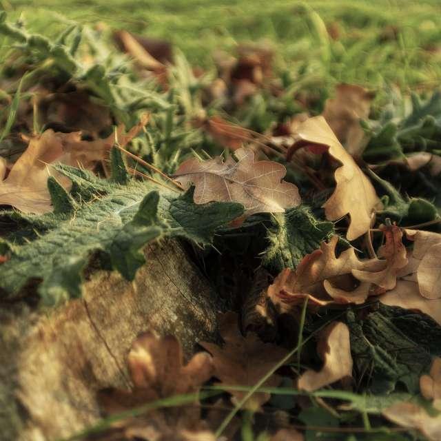 Autumn composition no. 191110.
