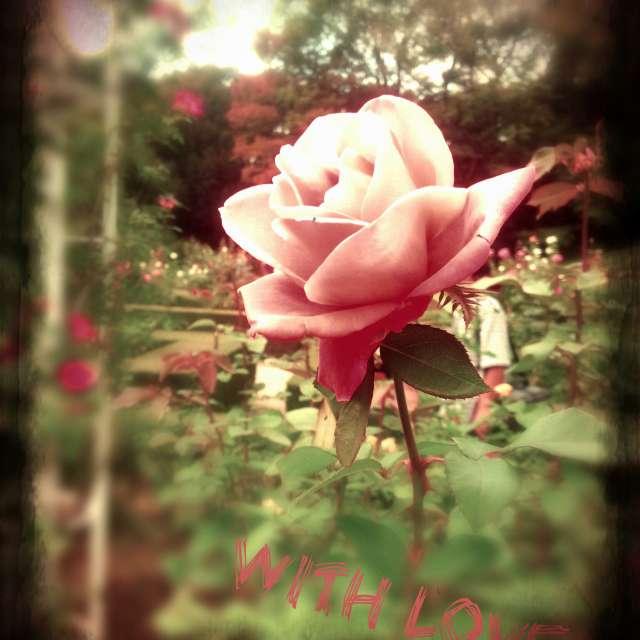 アンティークなバラ