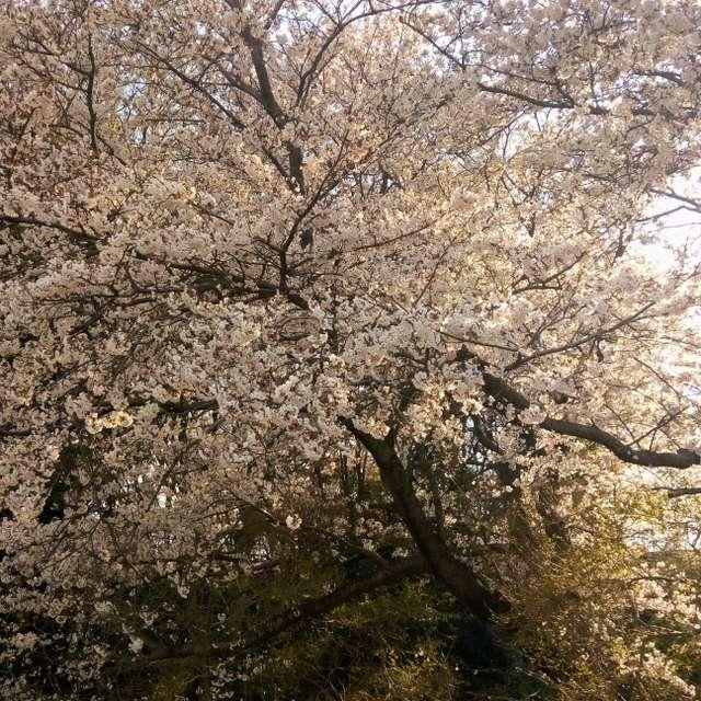 春日部市江戸川