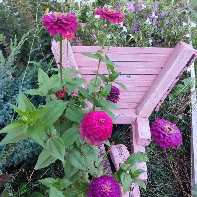 Purple flowers in flowerbed