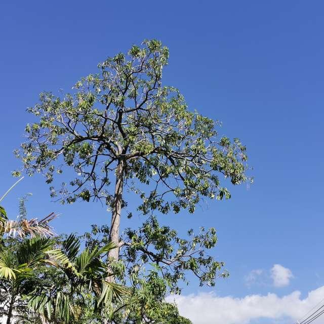 Blue sky and a tree