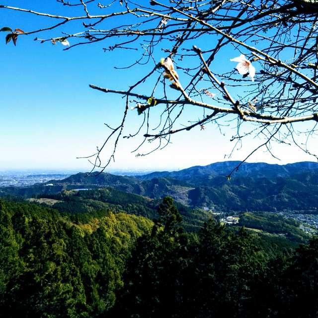 冬桜と里山