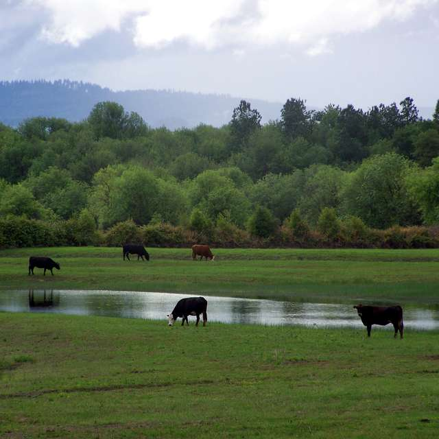 Grazing After The Rain