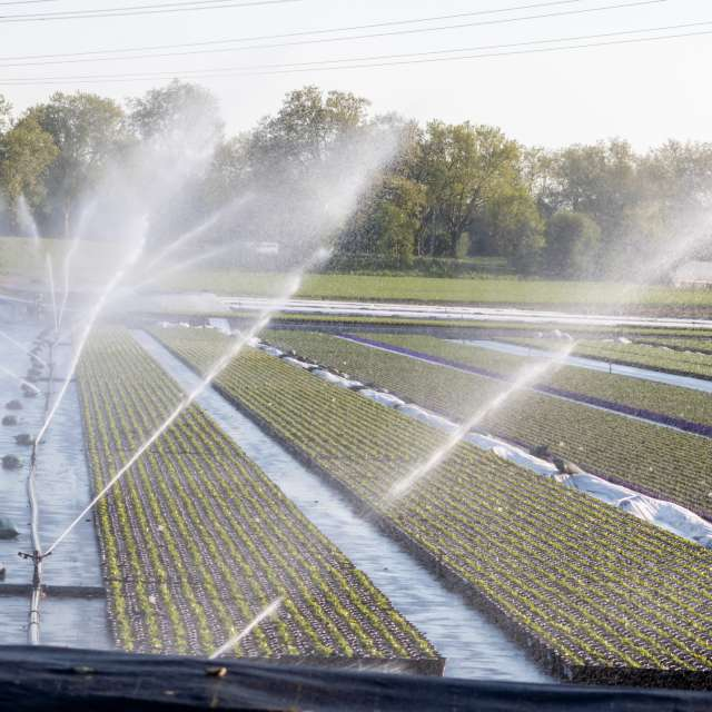 Hot summer irrigation system