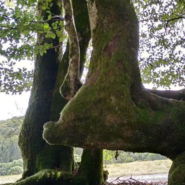Knee-Bending Tree