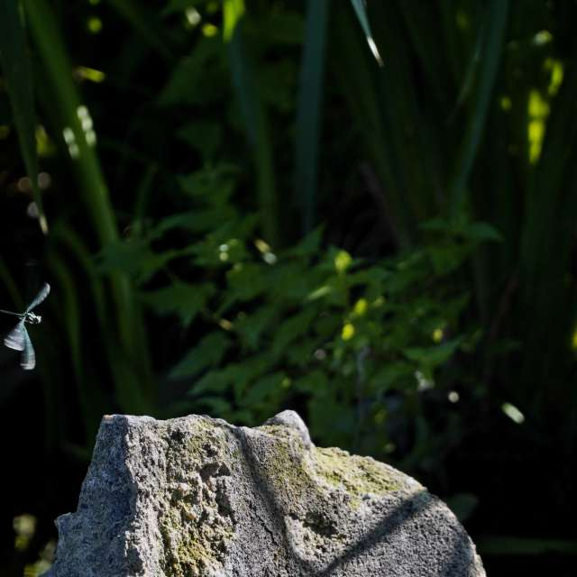 Landing on a stone